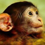 Funny Baby Monkey