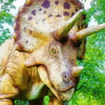 Giant Triceratops Puzzle
