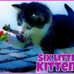 Six Little Kittens